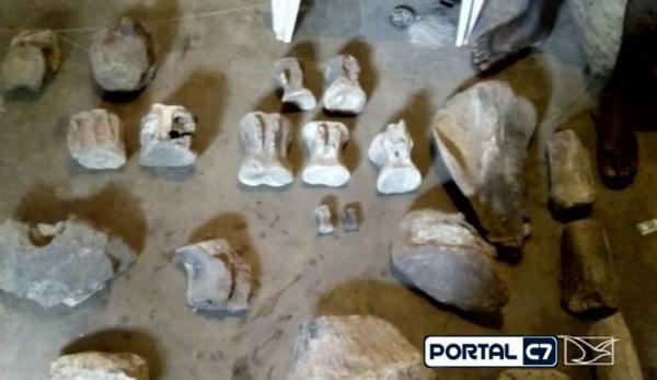 Fósseis de dinossauros são encontrados em cidade do Maranhão