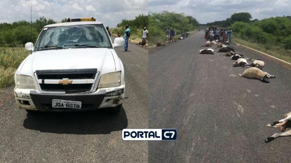 Veículo em alta velocidade mata rebanho com 29 ovelhas no Piauí