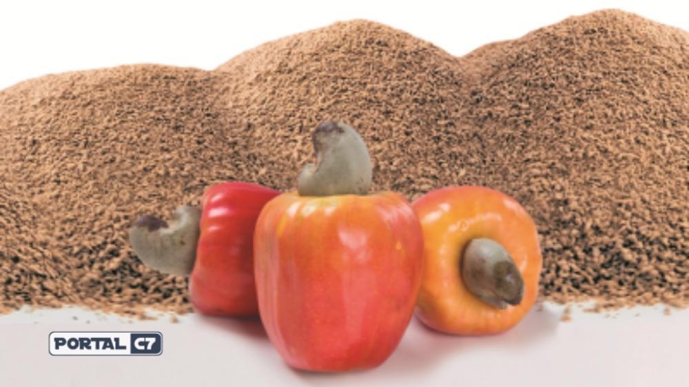 A fibra do caju está sendo testada no controle do peso, da glicemia e da gordura abdominal