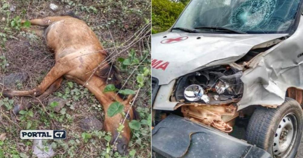 Ambulância de cidade do Piauí colide em animal na PI-113